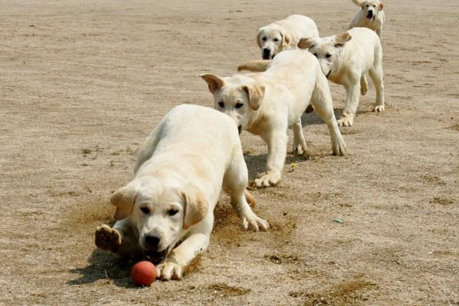 Dog Cloning Creates Puppypalooza