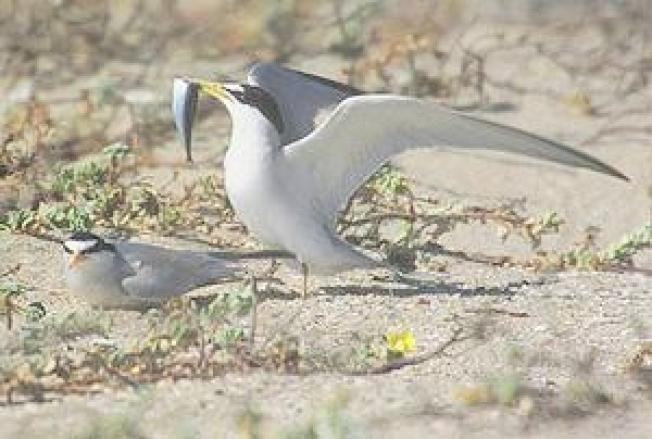 Audubon Innovation Grants Help Conserve Birds Coast to Coast