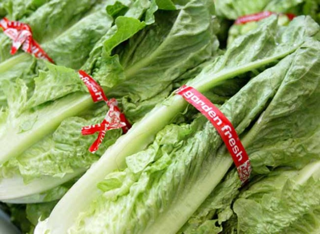 Lettuce Sue You