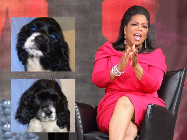 Oprah Shows Off New Puppies on Birthday Show