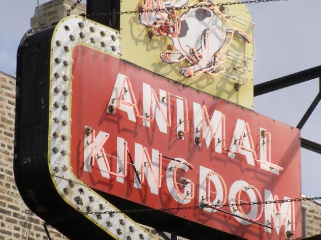 Animal Kingdom's Reign Ends