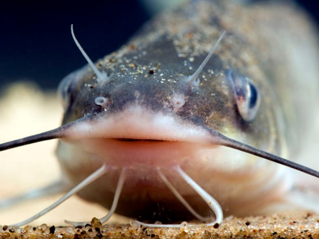 Catfish Cleaning Foreclosed Swimming Pools