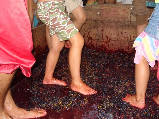 Stomping Grapes in Old Town