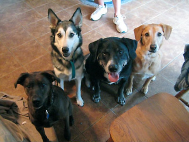 Four Orphaned Dogs Find a Home