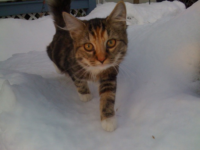 Man Charged With Breaking Cat's Leg