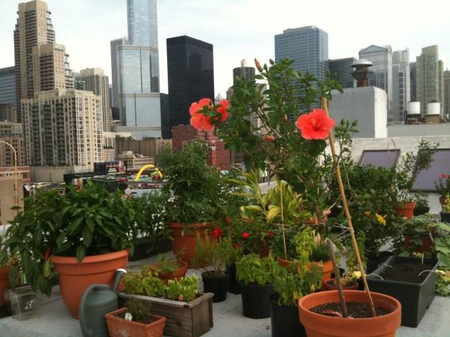 Aldermen Approve Later Curfew for Outdoor Patios, Rooftop Gardens