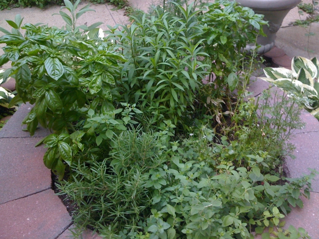 Growing Your Own Herbs Is A Tasty Money Saver
