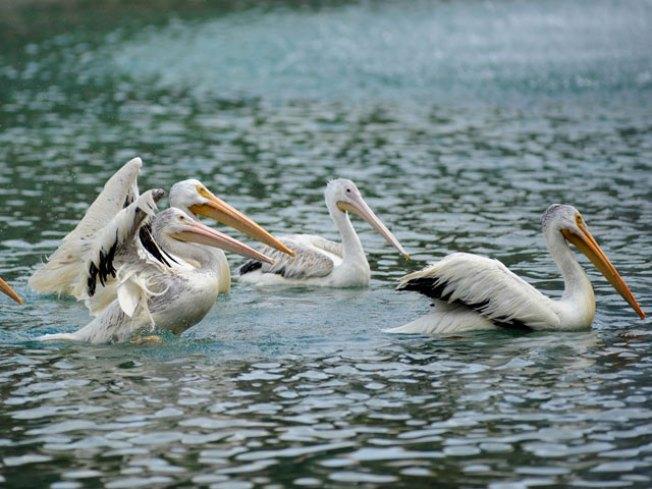 Brookfield Zoo Negotiating Water Rates