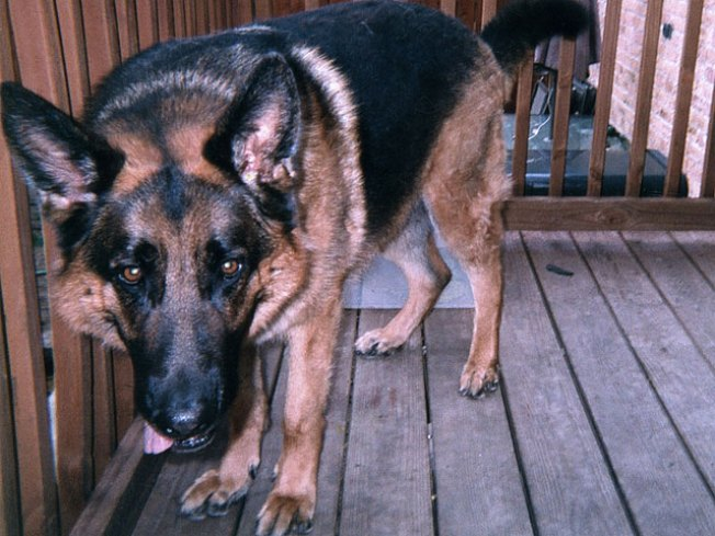 Off-Duty Officer Shoots Neighbor's Dog