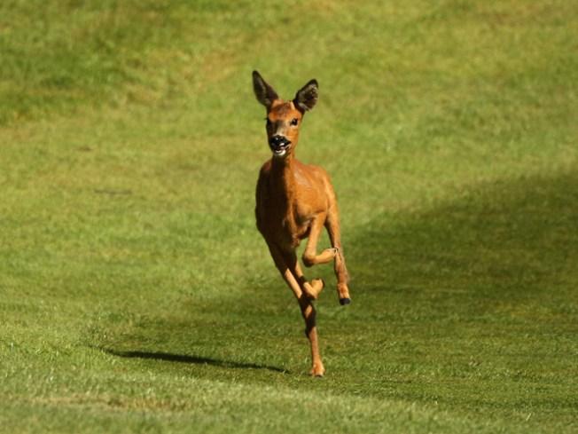 Doe Is Me: Hunters Slay Close to 200,000 Deer