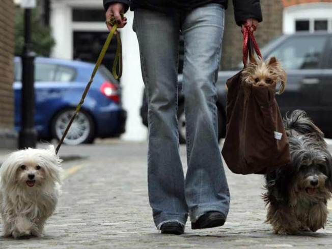 Dog Limit Proposal Shot Down by Animal Lovers
