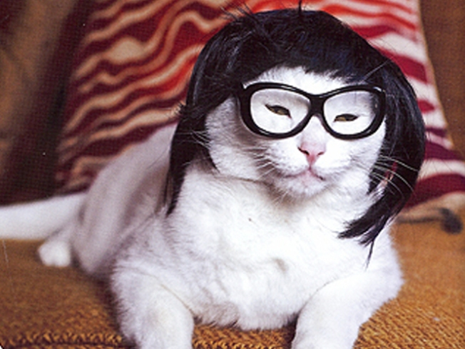 Wigged-Out Kitties