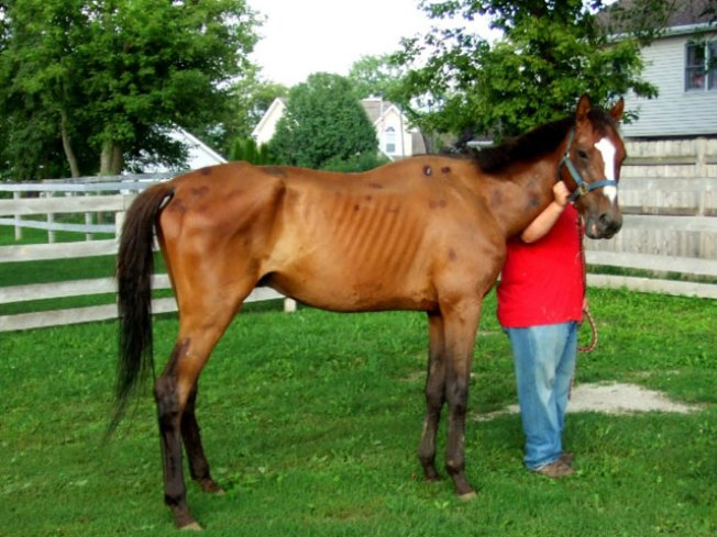 2 Women Charged With Horse Cruelty