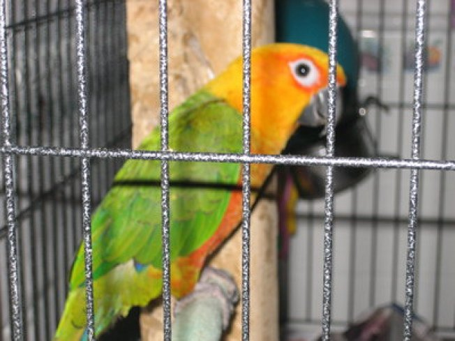 Exotic Birds Nabbed from Pet Store