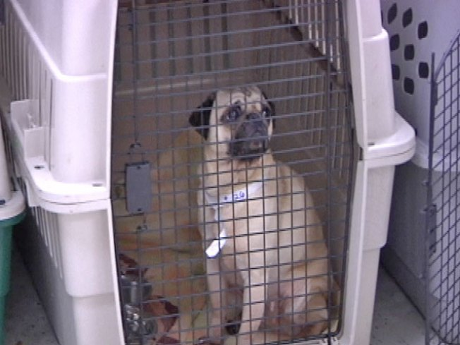 No Charges in Puppy Mill Case