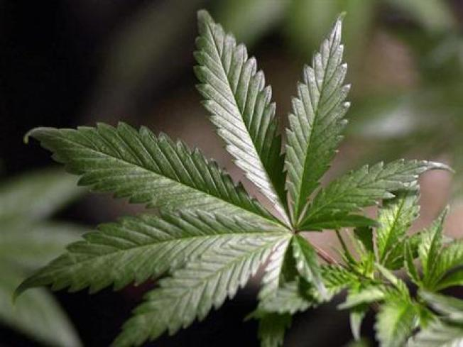 Senate Votes For Pot -- MediPot