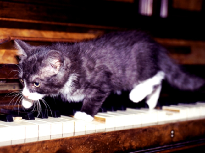 Nation Crazy for Philly's Piano-Playing Puss