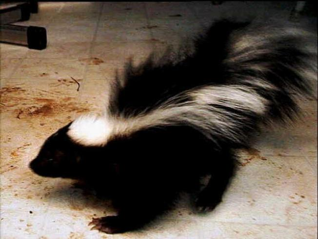 Suburban Skunk Shooter Fined $25