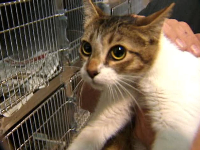 New Law Mandates Release of Pet Health Files