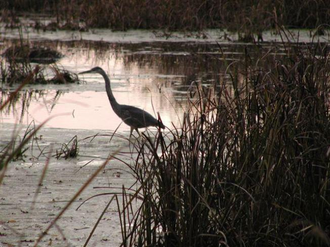 House Approves Bill to Charge Admission at Illinois State Parks