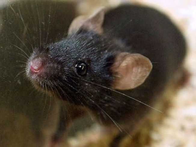 Joliet Couple Receives Mouse in the Mail