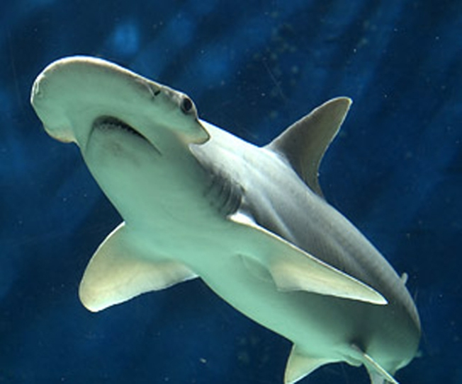 15 Sharks Die at Indy Zoo