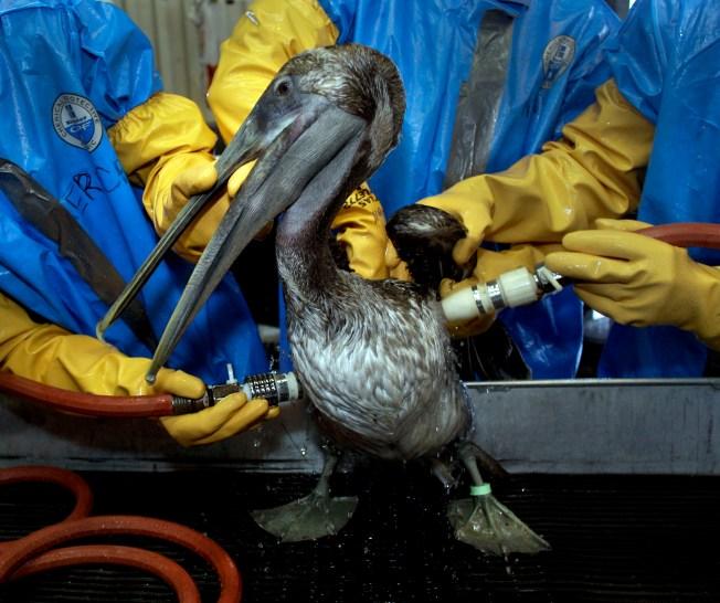 Huge Gulf Spill Draws Few Donations