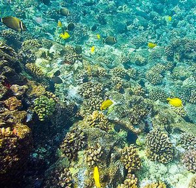 Honolulu Declaration Offers Ways to Curb Ocean Acidification