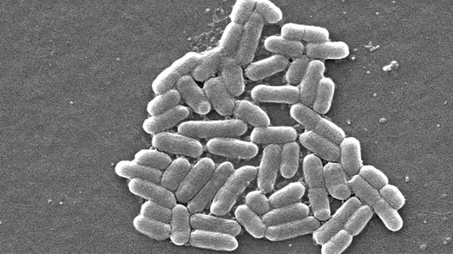 DuPage Identifies Restaurant Tied To E. Coli Outbreak