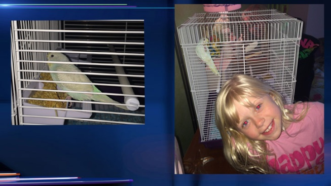 Family Says It Wasnt Notified Of Contagious Parakeets Nbc Chicago