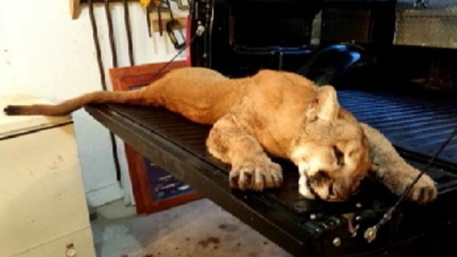 Cougar Found on Northern Illinois Farm