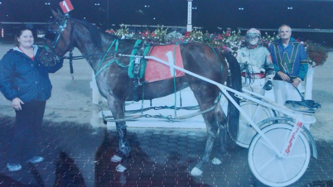 Reward Offered in Race Horse Death