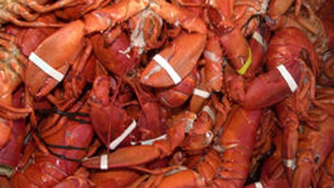Man Stole Lobsters, Crab Legs to Impress Date: Cops