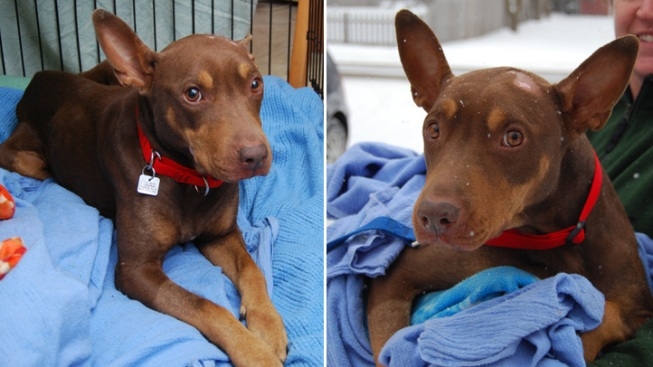 Rescued Doberman Found After Escape at Midway