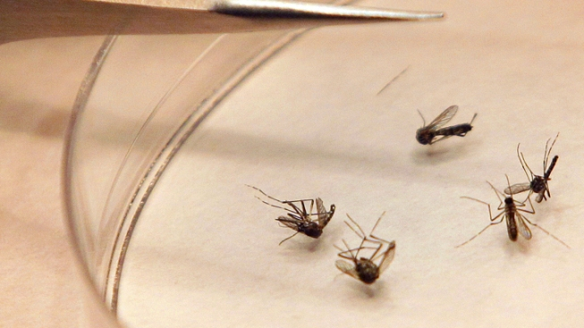 Oak Lawn Woman is Cook County's First Case of West Nile Virus This Season