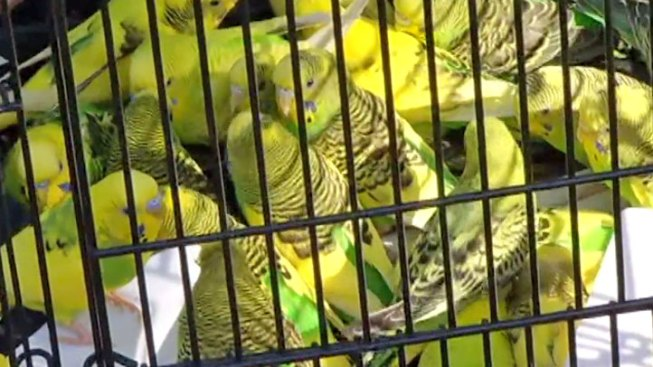 Charges Filed Against Bird Hoarder
