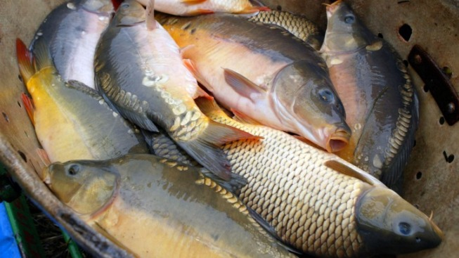 $7M Earmarked For Asian Carp Monitoring