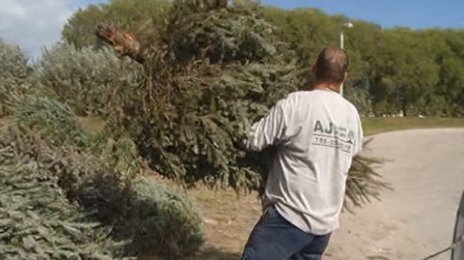 Under the Tucson Sun. More than 20 locations across the Chicago area will  offer free Christmas tree recycling ... - Christmas Tree Recycling Locations In Chicago - NBC Chicago