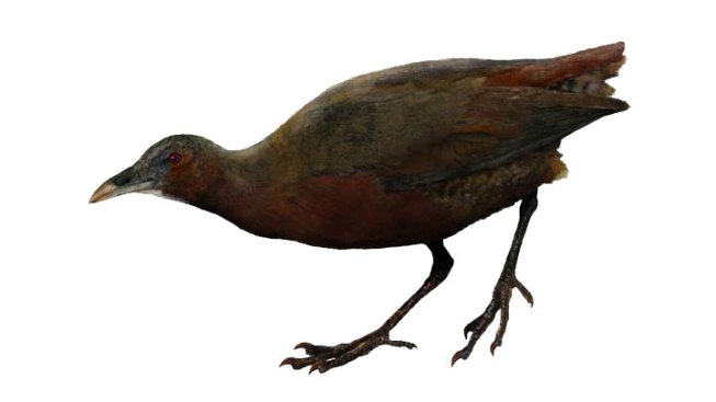 Field Museum Researchers ID New Bird Species