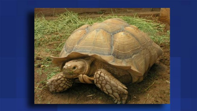 Giant Tortoise Stolen from Lincolnwood Shop