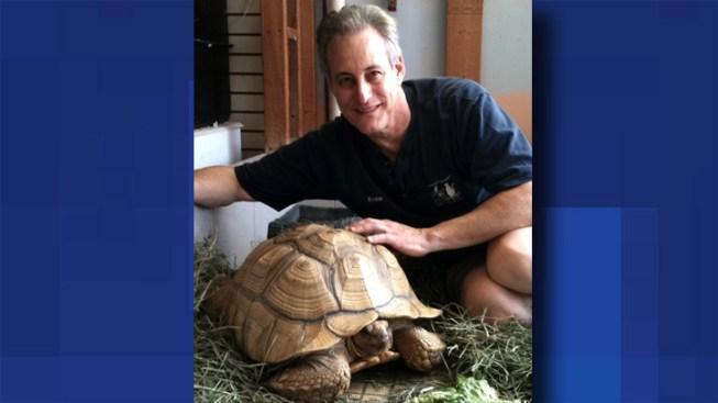 Stolen Tortoise Home Again