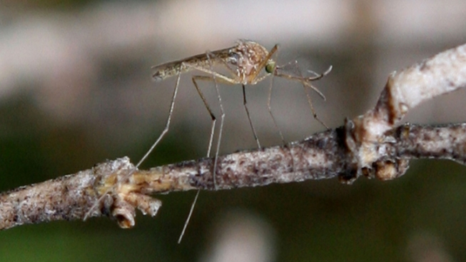 West Nile Appears Earlier This Year