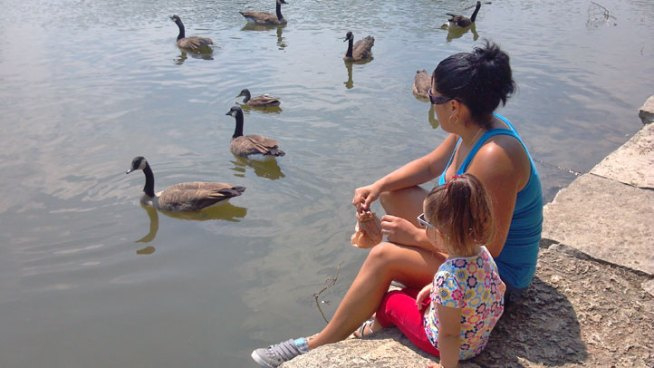 Poisoning is suspected in the deaths of multiple geese at two Chicago parks on the city's southwest side.