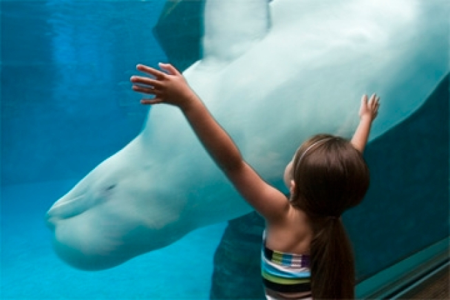 Shedd Aquarium Offers Freebie Days