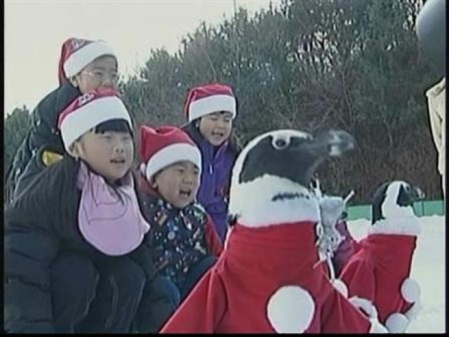 Penguins in Santa Costumes, Yippee!