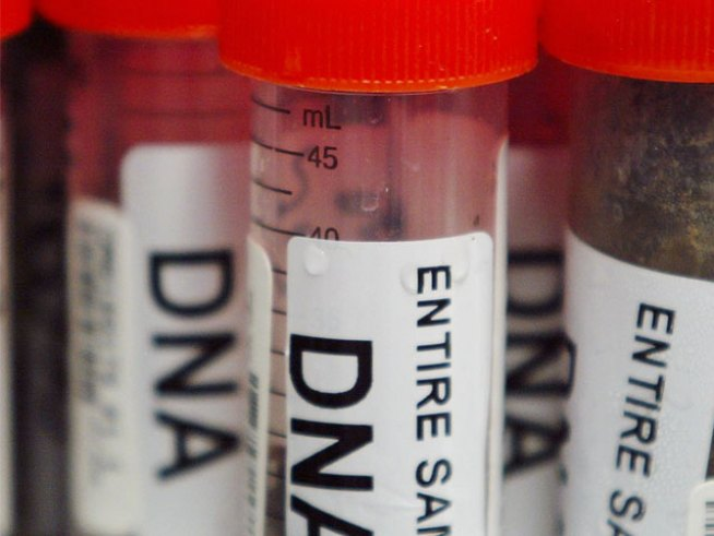DNA Program for Felons Fails Miseribly