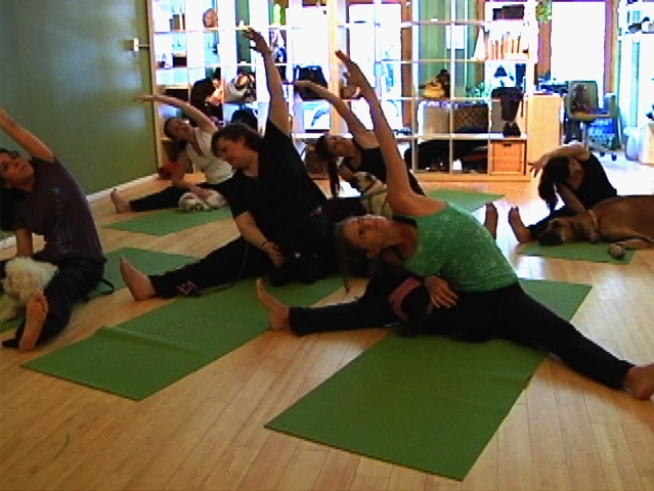 "Manhattan Yoga Studio Brings New Meaning to ""Downward Dog"""
