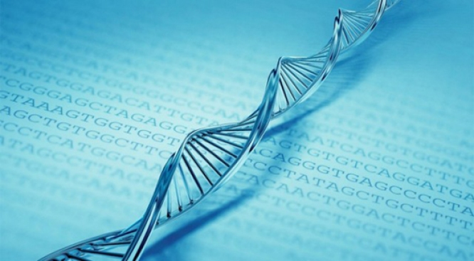 Letter from DNA Discoverer to Be Auctioned in NYC