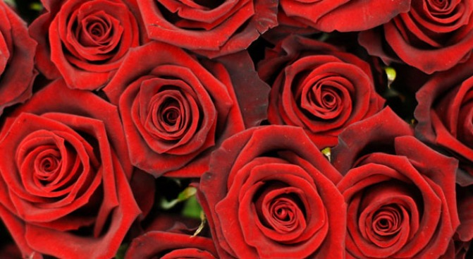 Buy Valentine's Day Flowers to Help Local Charity