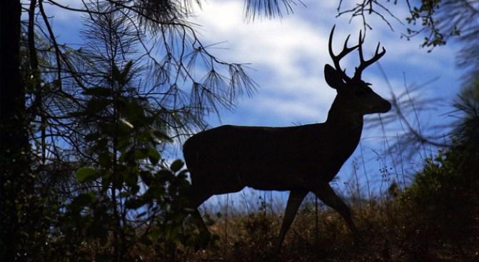 Revenge of the Deer